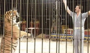 Famoso domador de circo es asesinado por sus cuatro tigres en Italia