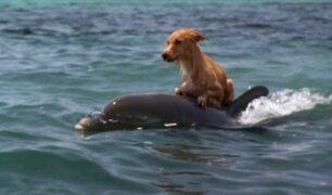 Insólito: delfín salva a perro de ser devorado por tiburón