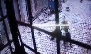 India: hombre sufre brutal ataque de monos