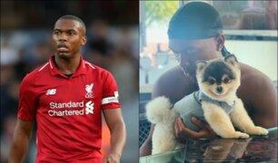 Daniel Sturridge ofrece 33 mil euros a quien encuentre a su perro perdido