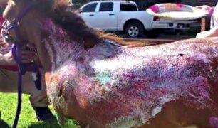 Exmodelo es repudiada por pintar un pony con glitter