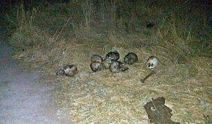 Cusco: hallan ocho cráneos humanos en interior de vivienda