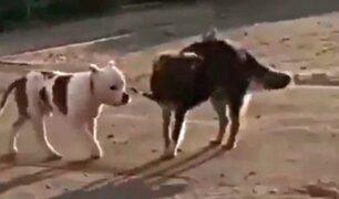 Perro callejero 'libera' a can doméstico atado y lo lleva de paseo