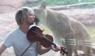 EEUU: violinista ofrece recital para una leona y esta fue la reacción del felino