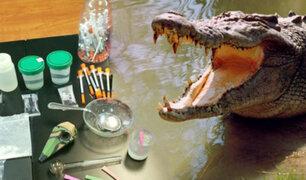 EEUU: advierten que tirar drogas por retretes puede crear caimanes adictos