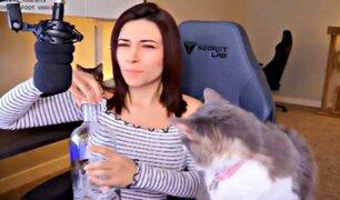 'Gamer' maltrata a su gato durante transmisión en vivo