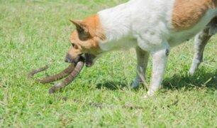Filipinas: perros salvan a niño del ataque de una cobra