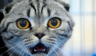 Esta es la misteriosa 'enfermedad' provocada por un gato