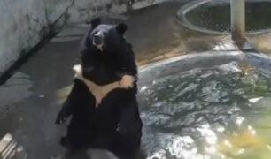 Tailandia: enorme oso se refresca de manera peculiar