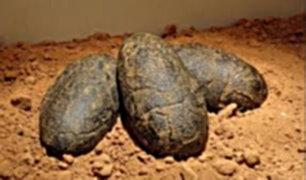 China: niño encuentra nido de huevos de dinosaurio de 65 millones de años