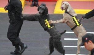 Policía Canina no participará de la Gran Parada Militar