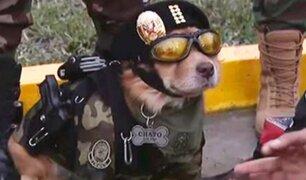'Chato': conoce al agente canino que cautivó a decenas de asistentes en Parada Militar