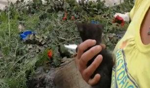 Chiclayo: queman nueve gatitos mientras dormían en refugio