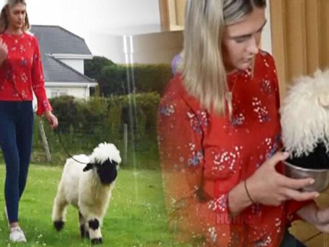 Conozca a Olva, la oveja que se cree perro
