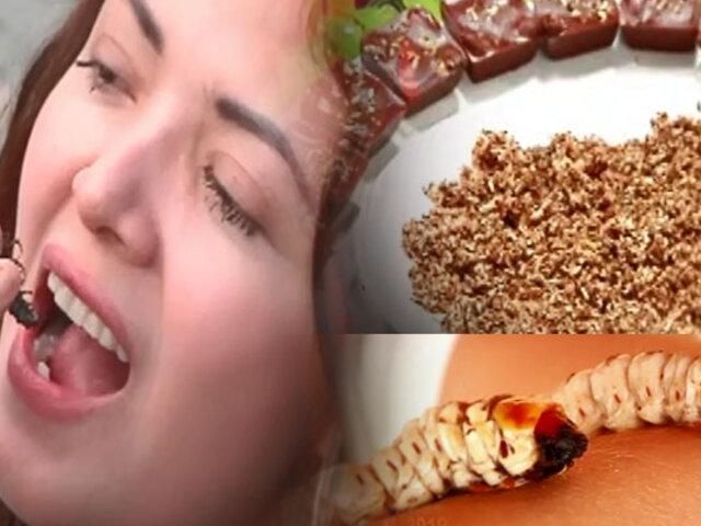 Viscosos y sabrosos: atrévete a probar estos nutritivos insectos al vapor