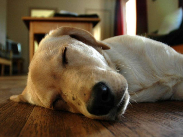 Perro muere en azotea al ser abandonado sin agua ni comida