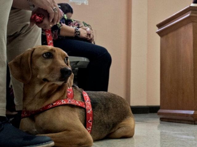 """""""Campeón"""": conoce al perro que asistió a juicio como víctima de maltrato"""