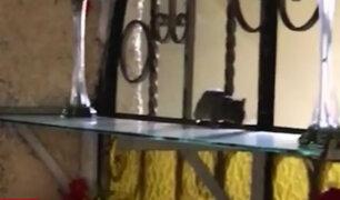 Cercado de Lima: graban a roedor en restaurante donde acuden policías