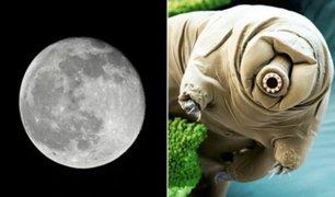 Miles de ''osos de agua'' se encuentran varados por accidente en la Luna