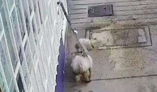 VMT: Sujeto abandona su perrito en la puerta de veterinaria