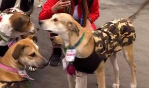 Lima 2019: perritos de Villa Panamericana son adoptados por atletas