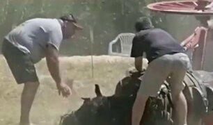 """Un caballo se desploma """"de agotamiento"""" en prueba de tiro y arrastre"""