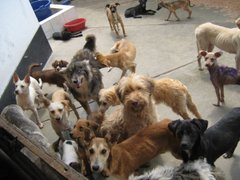 Ventanilla: mujer mantendrá albergue para perros tras ganar juicio a municipio