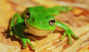 Video: encuentran rana viva dentro de ensalada envasada
