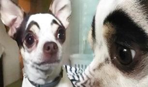 Cejas que cautivan: perrita se vuelve viral por su expresiva mirada