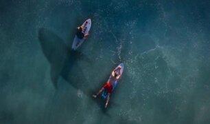 Video: jóvenes surfean entre tiburones blancos sin saberlo