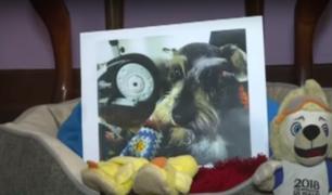 Extorsionadores secuestran mascota y piden a familia 1 000 dólares de recompensa