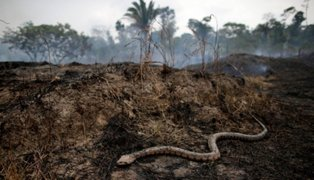 Este es el indignante uso que le darán a las tierras deforestadas en la Amazonía, según expertos