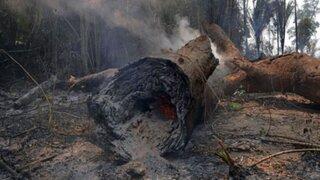 Incendios en el Amazonas: cuánto tardará en reforestarse  los bosques destruidos