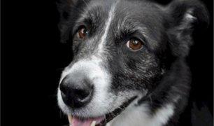 Argentina: perro 'colabora' con delincuentes para robar cervecería
