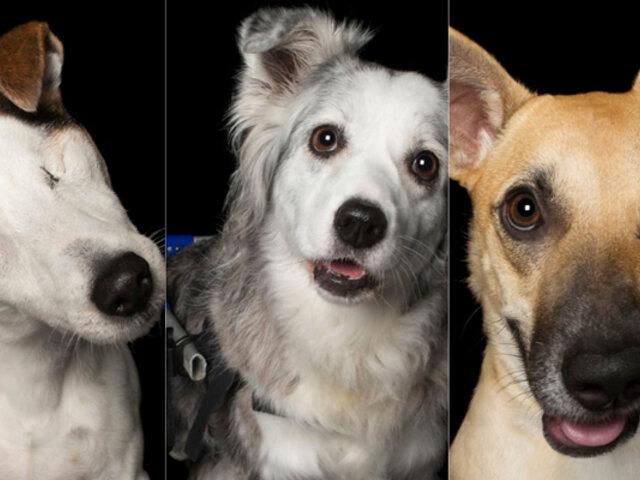 Australia: conozca a la fotógrafa que ayuda a mascotas con discapacidad