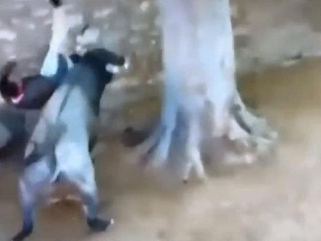España: hombre pierde la vida tras ser embestido por toro