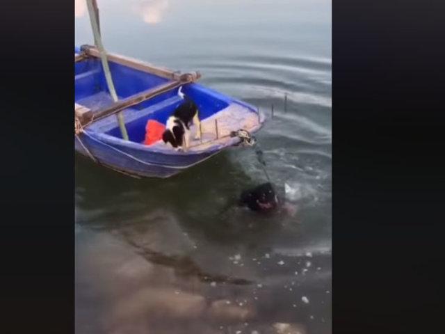 [VIDEO] Perrito es captado lanzándose a un río para salvar a su amigo