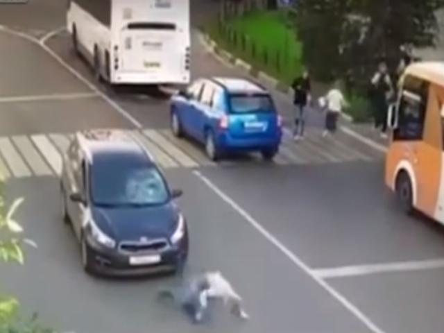 Rusia: apurado joven sufre impactante atropello, se levanta y continúa caminando