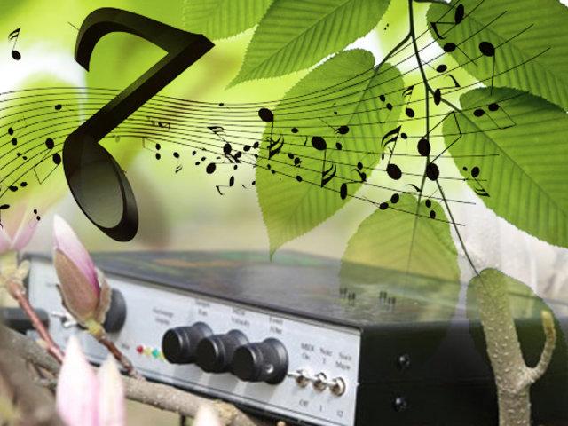 Música vegetal: conozca las melodías que producen las plantas