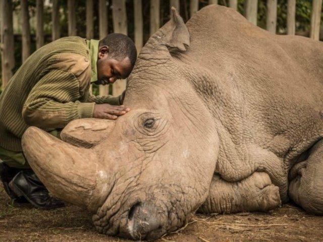 Visitantes de zoológico escribieron sus nombres sobre lomo de rinoceronte