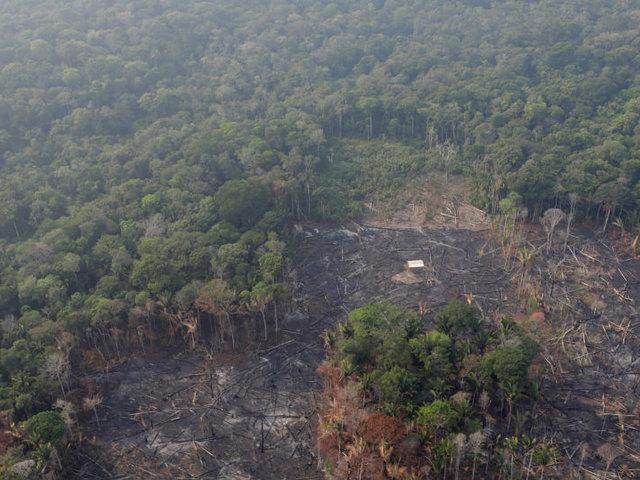 """COEN: """"No hay ningún incendio forestal activo en La Amazonía peruana"""""""