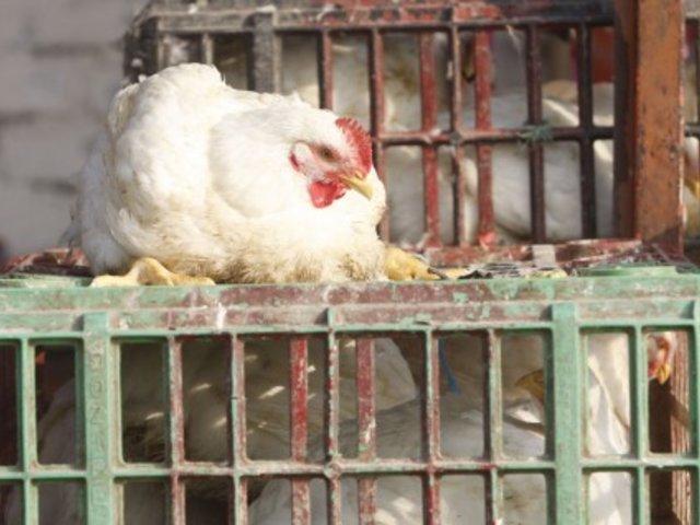 Precio mayorista del pollo subió en agosto y llegó a los S/4.12 por kilogramo