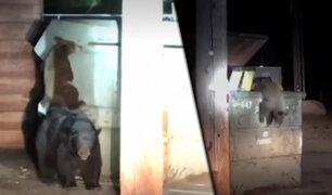 EEUU: policías rescatan a un oso que quedó atrapado en contenedor de basura