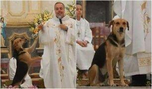 Brasil: sacerdote rescata perritos callejeros y promueve la adopción en misa
