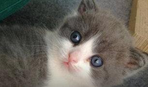 China: compañía biotecnológica clona por primera vez a un gato doméstico