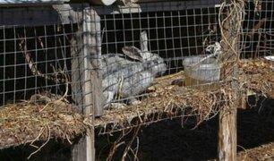 Granjeros intentaron matar a activistas que liberaron a sus animales
