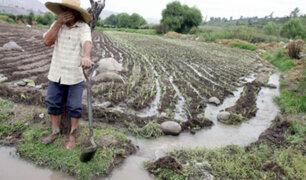 Yara: Gobiernos deben realizar una transformación radical en sector agrícola