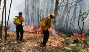 Expertos advierten que incendios forestales en Bolivia son incontrolables