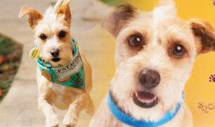 Conozca a Patacón, el perro callejero que se convirtió en estrella de las redes