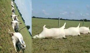 Estados Unidos: tormenta eléctrica mata a 23 vacas